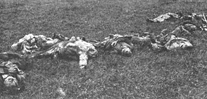 Photograph of dead bodies